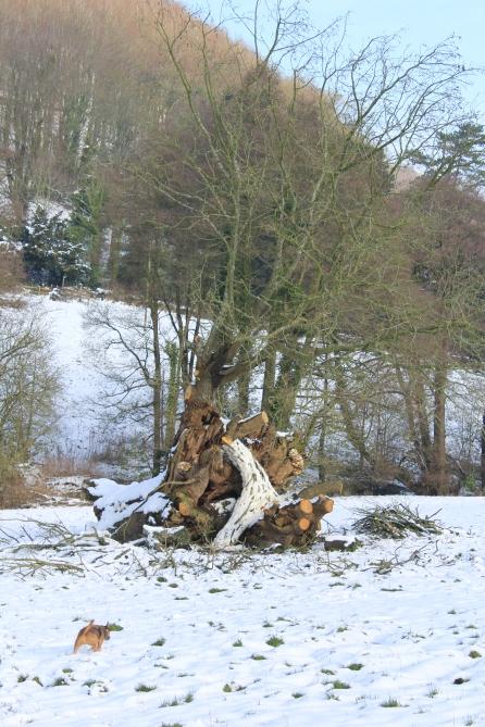 Sticks and snow