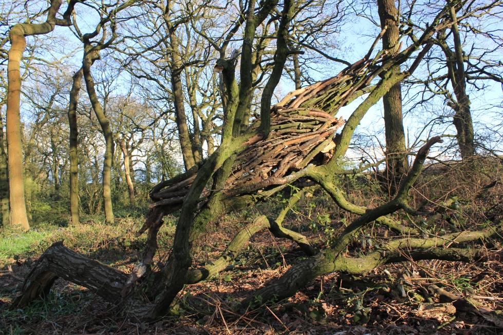 Dead tree dead wood new life!